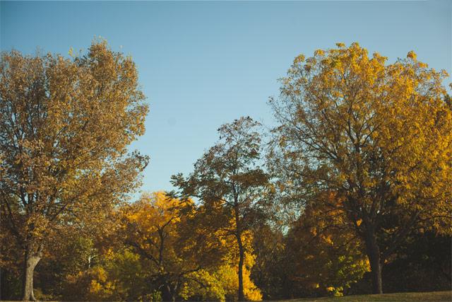 1 Jester-park-trees